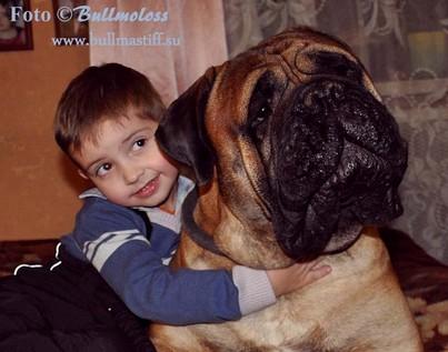 Как собака заботится о потомстве | 317x403